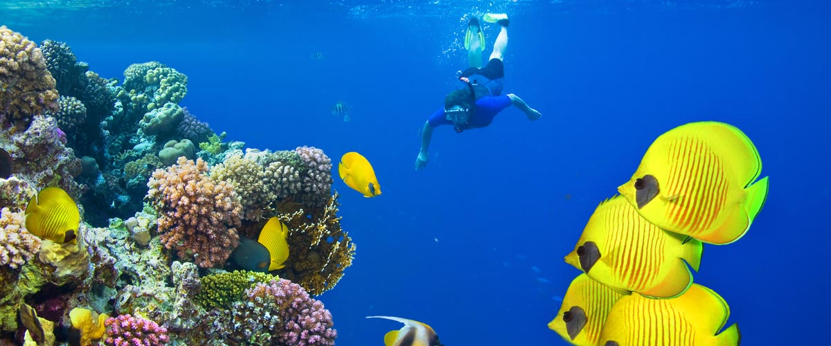 Scuba diving in the Red Sea Coral Reef
