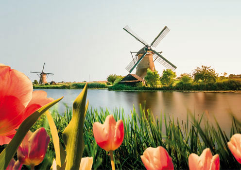 Windmills surrounded by tulips in Rotterdam