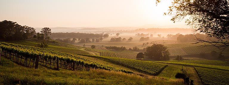 Hunter Valley at sunrise