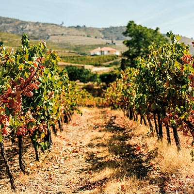 Take a vineyard tour