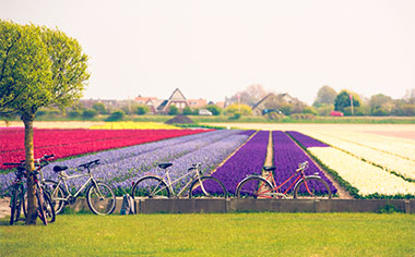 Discover the Netherlands by bicycle