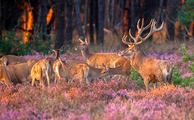 The picturesque Hoge Veluwe National Park, Netherlands