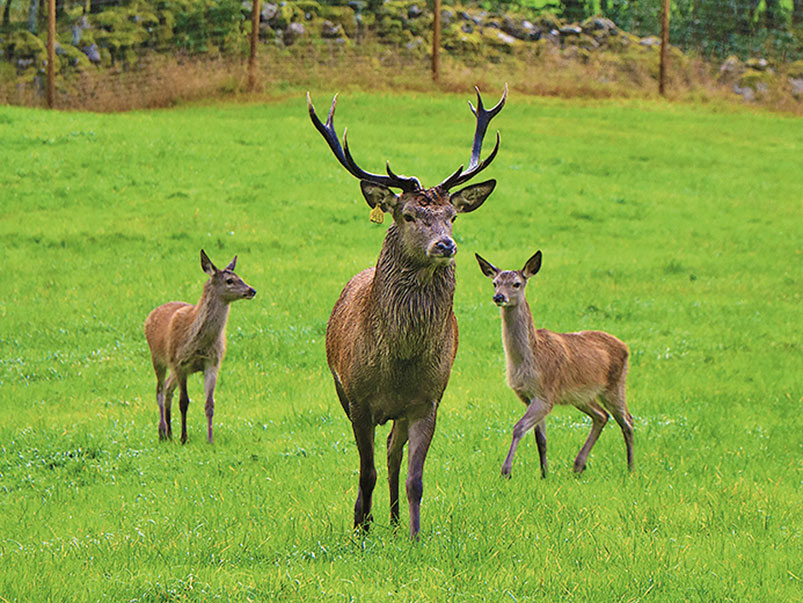 On the Red Deer Farm